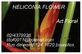 logo heliconia flower